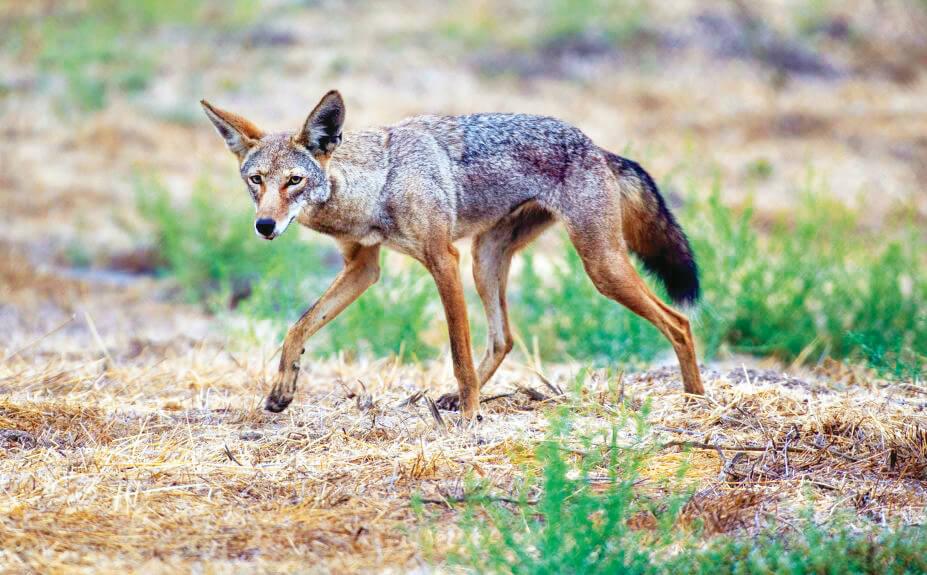 Suburban Wildlife: Tips for Peaceful Coexistence